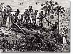 West African slaves being marched to the coast for transport